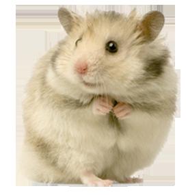 Dierenkliniek De Berg - Hamster
