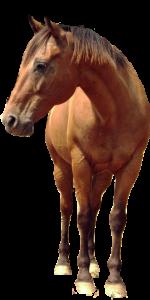 Dierenkliniek De Berg - Paard