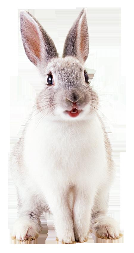 Dierenkliniek De Berg - konijn