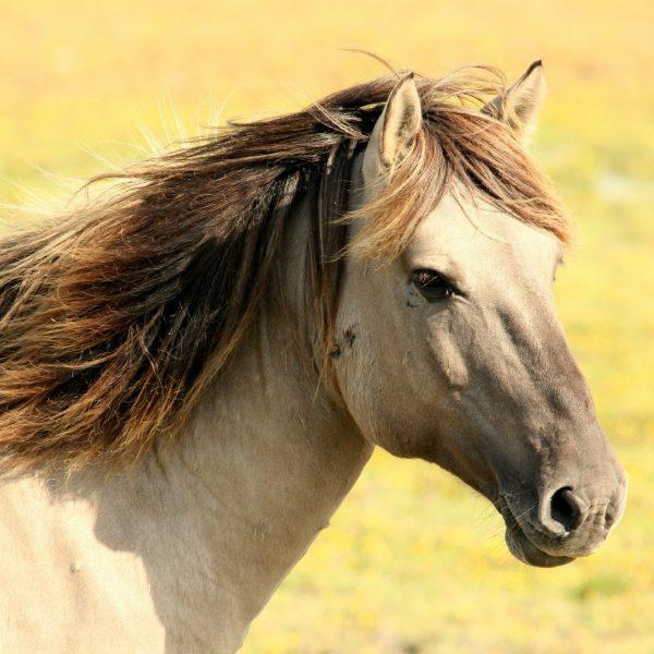 Wormen bij het paard