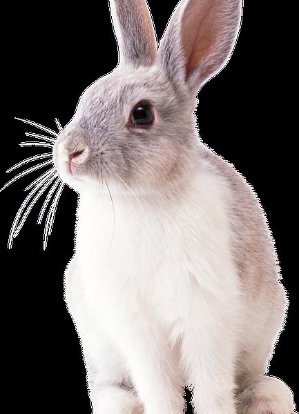 Nieuw vaccin voor het konijn